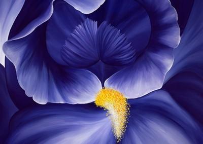 Jeryll's Iris