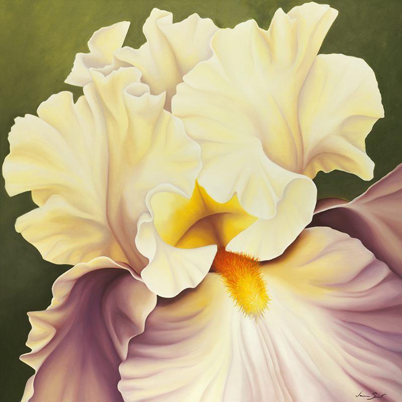 Dusty Rose Iris